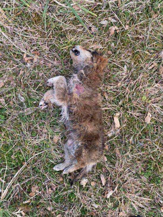 Konjic psi otrov februar2021 FB3