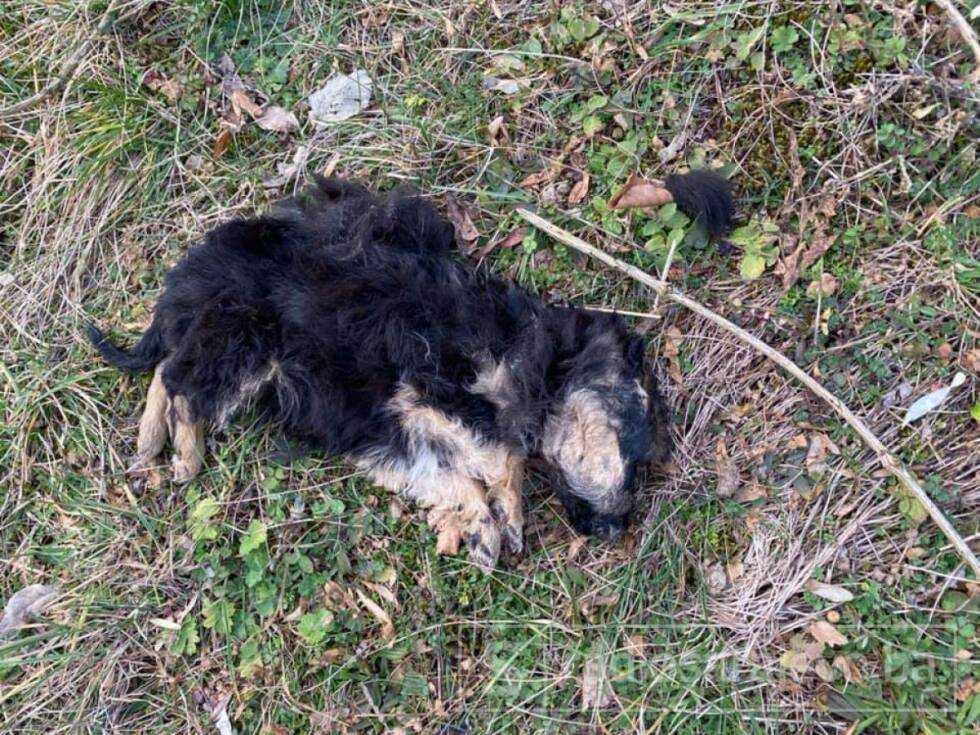 Konjic psi otrov februar2021 FB5
