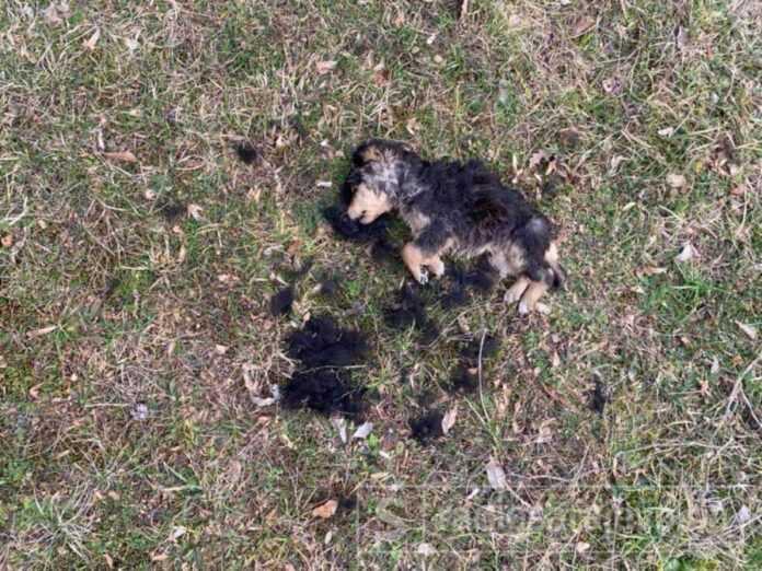 Konjic psi otrov februar2021 FB6