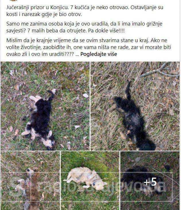 Konjic psi otrov februar2021 FB8
