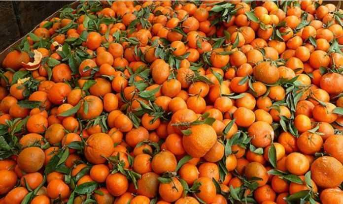 mandarina 696x415 1