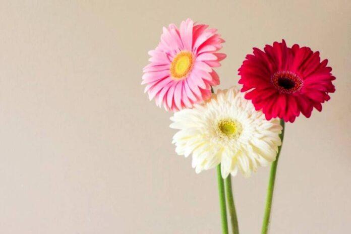 cvijece tricvijeta ljepota pinterest