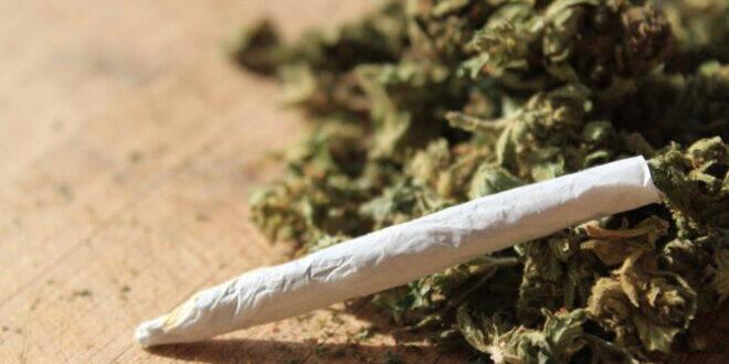 marihuana droga ili lijek e1592301341594 660x330 1