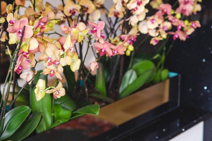orhideja cvijece dom ilustracija pexels