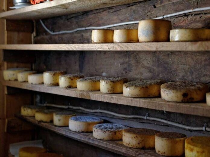 sir zdravlje hrana ishrana