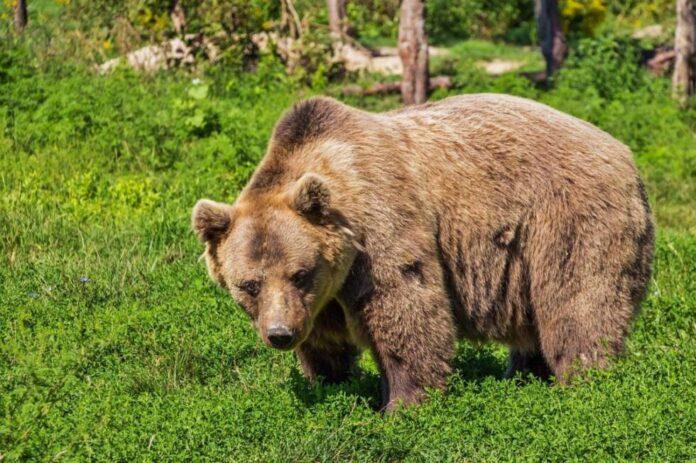 bear 422682 1280