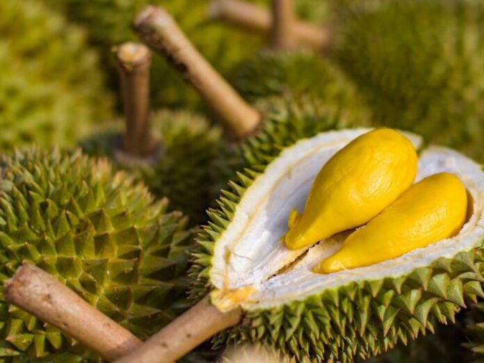 durian voce 1170x878 1