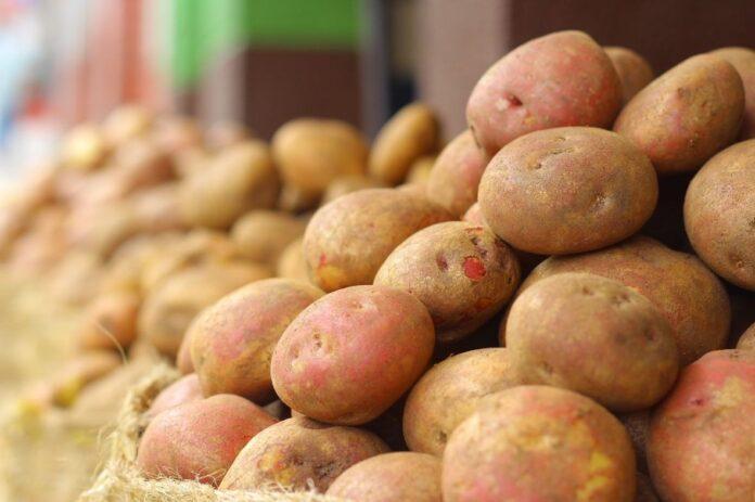krompir ilustracija pixabay