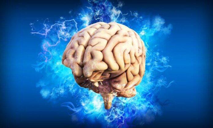mozak brain 4314636 1920 750x450 1