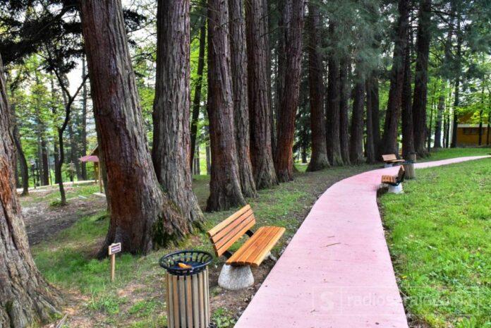 Sekvoje Grdonj Park Prijateljstva Sarajevo Drvece Foto ADK3