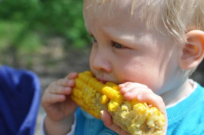 kuhani kukuruz dijete hrana pixabay