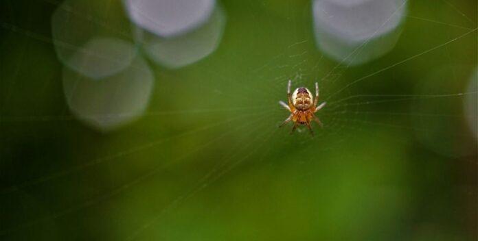 insekti u kuci pauk foto pixabay