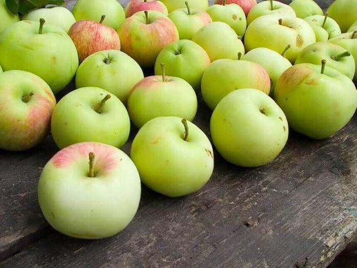 jabuke hrana 99