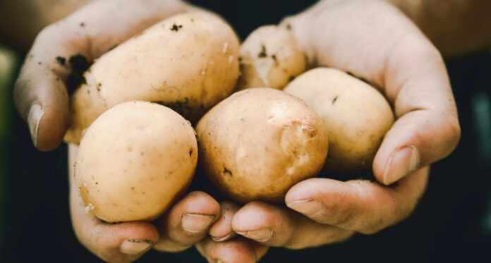 krompir unsplash 1