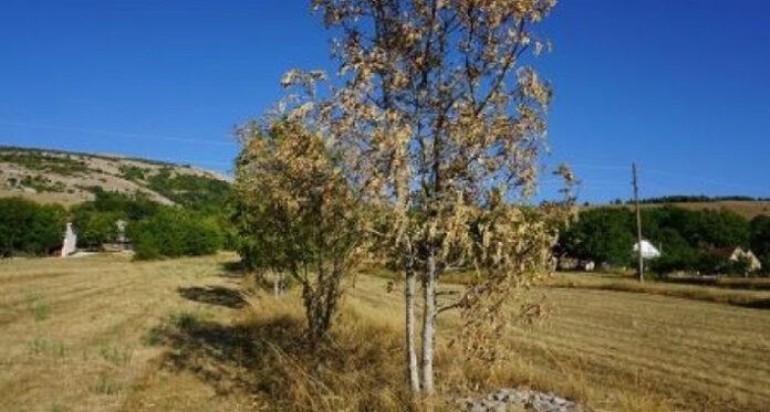 susa tomislavgrad fena