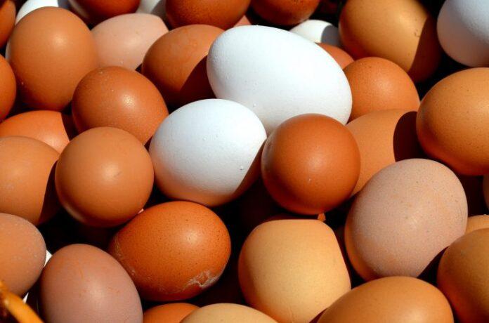 egg 2580904 1920 188568 750x496 1