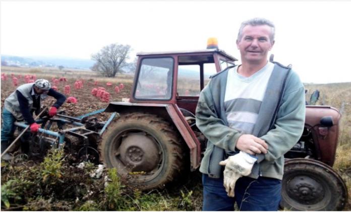 Slobodan uzgojio 120 tona krompira i garantuje u kvalitet2 696x421 1