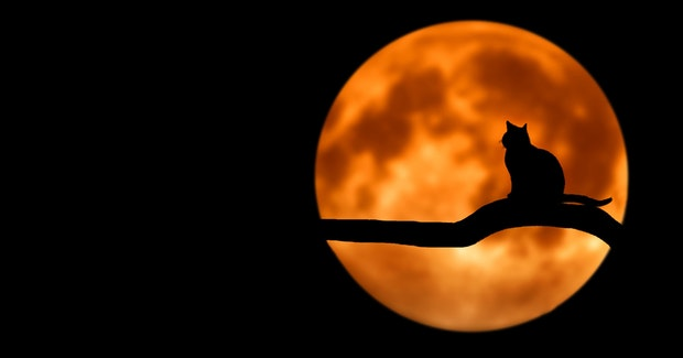Crna lažna maca