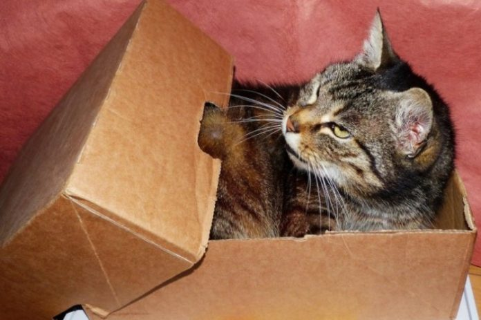 mačka kutija 696x463 1