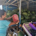 waVqbeBy lubenica rodoc 475 316 s c1
